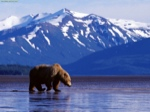 Randy & Debbie's Alaskan Adventure 2016 travel blog